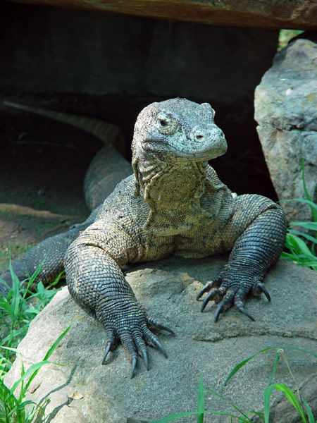 http://www.photohome.com/pictures/animal-pictures/wildlife/komodo-dragon-1a.jpg