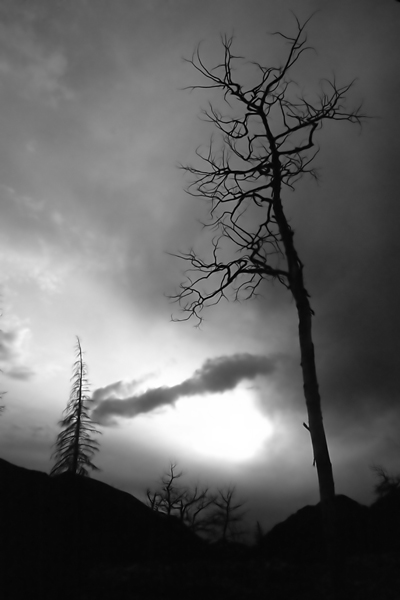 colorado-tree-1a.jpg