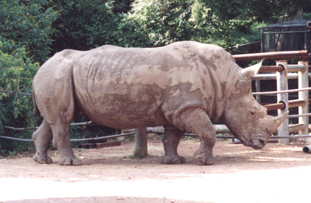 http://www.photohome.com/pictures/mixed/rhinoceros-1.jpg
